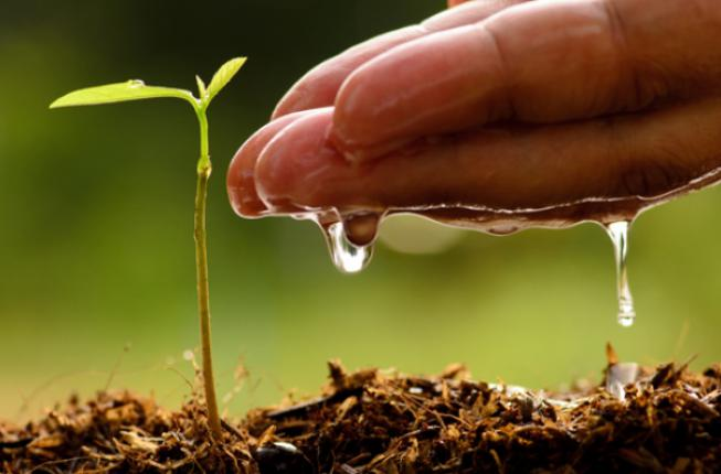 Collegamento a Sustainable Agriculture