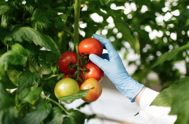 Collegamento a Biotechnologies for food science