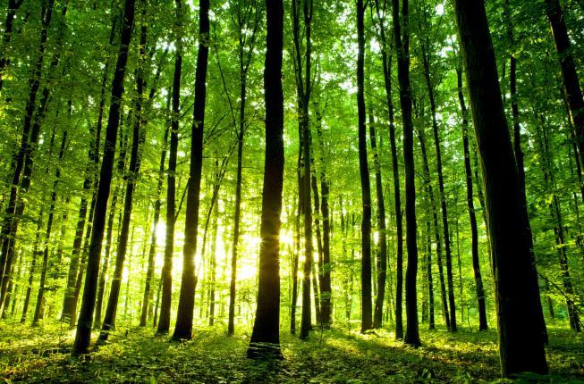 Collegamento a Forest Science